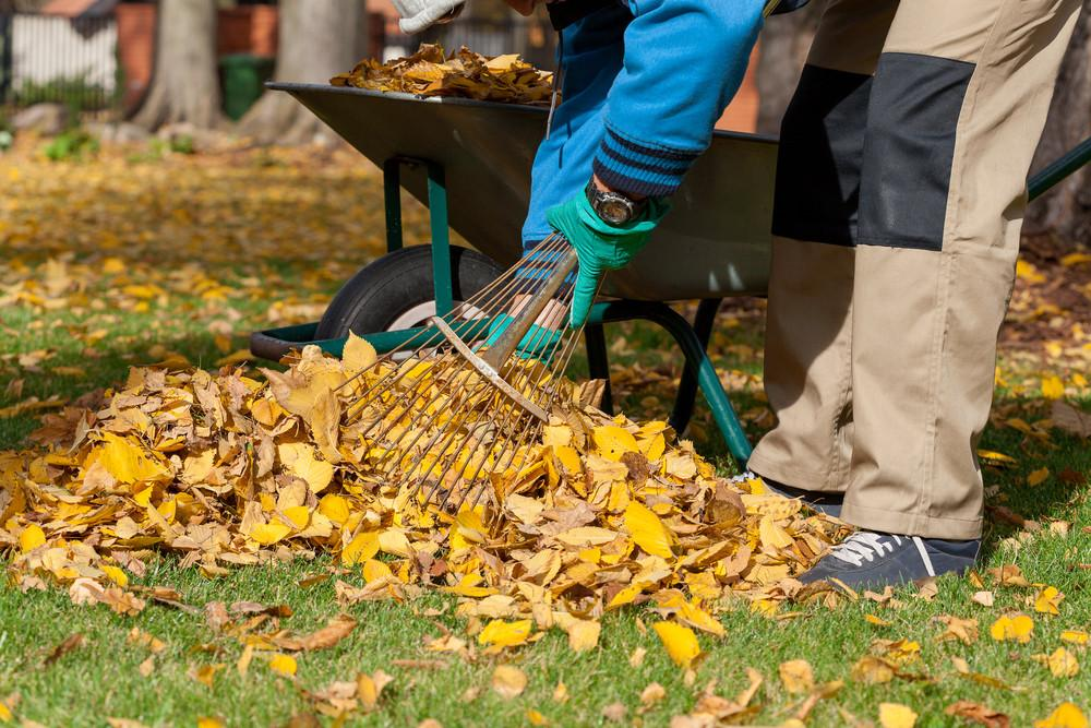 Fall Landscaping Ideas Weekend