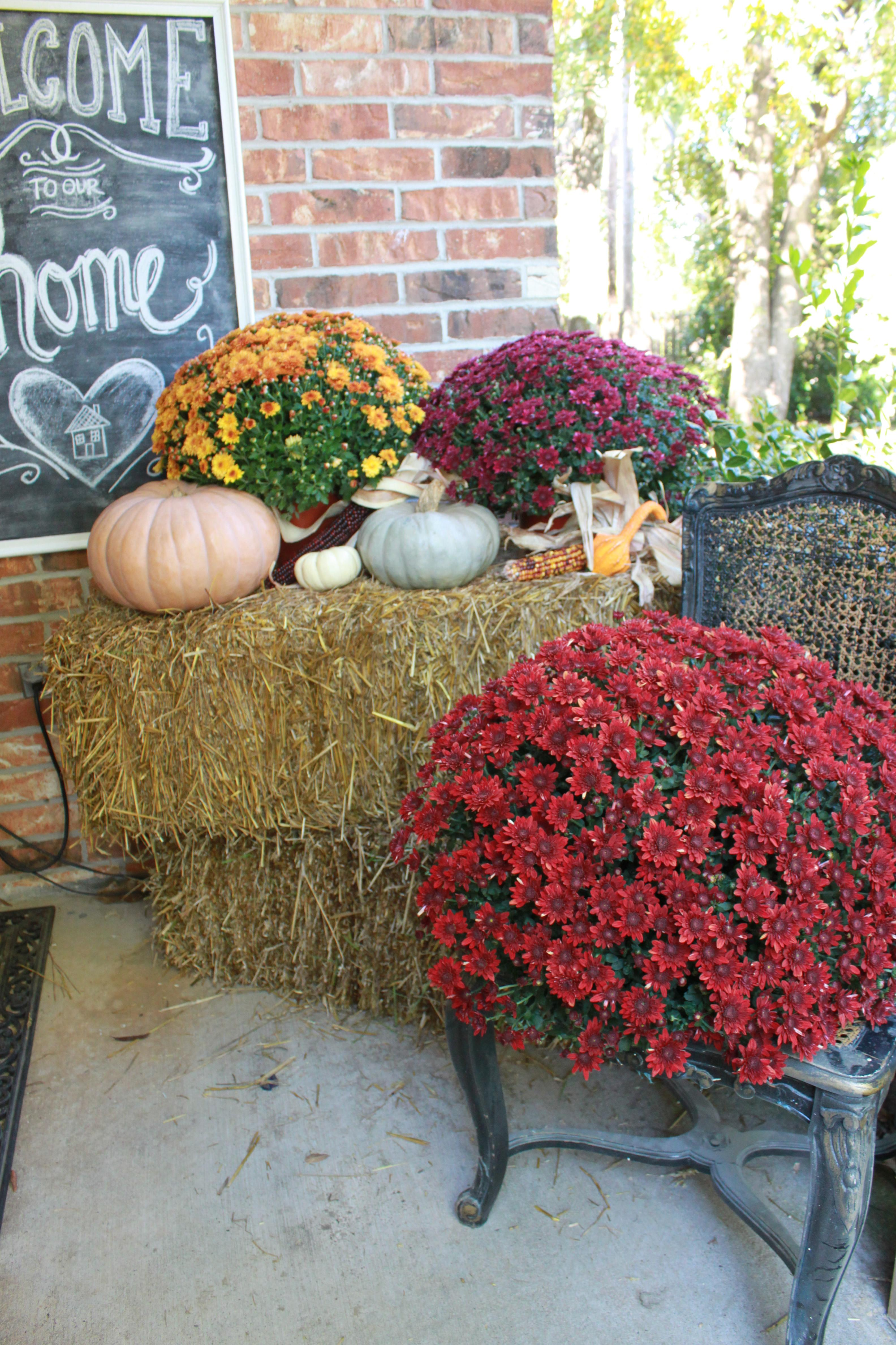 Fall Porch Decor All Things New Interiors