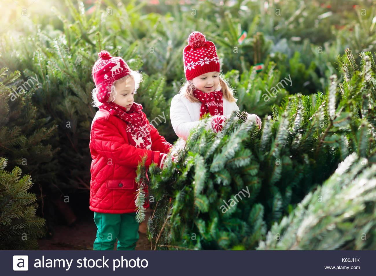 Family Selecting Christmas Tree Kids Choosing Freshly Cut