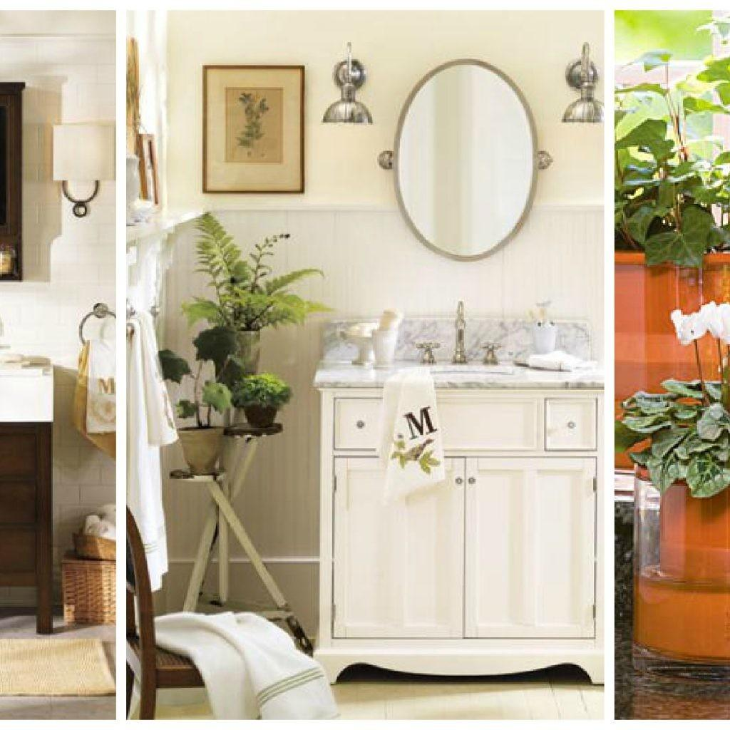 Favorites Bathroom Plants Choices Ward Log Homes