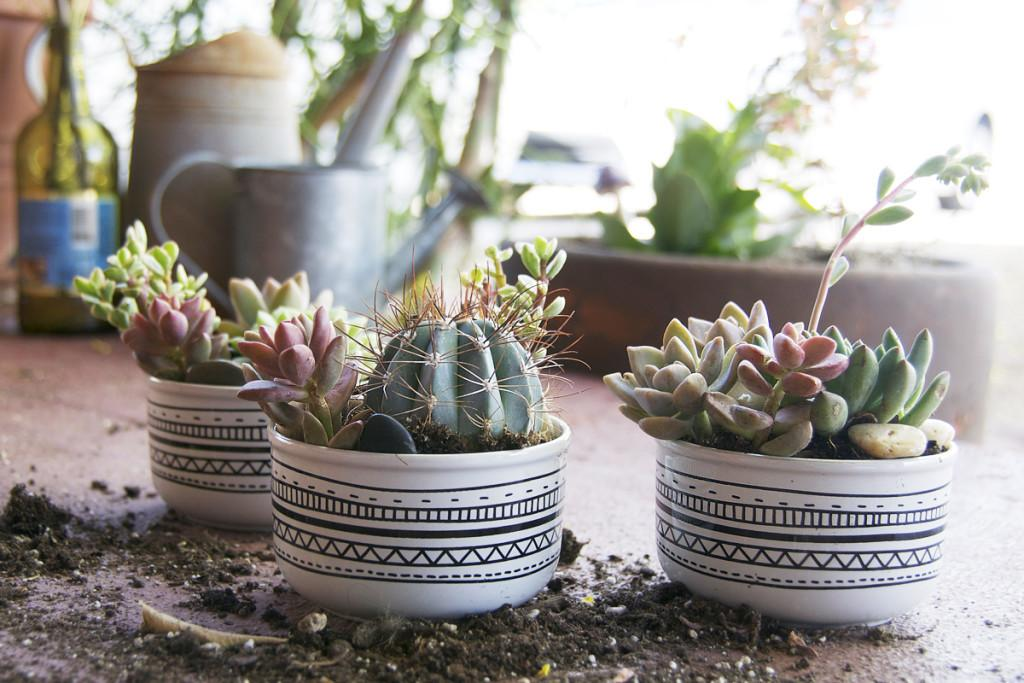 Fill Your Home Glamorous Simple Diy Succulent
