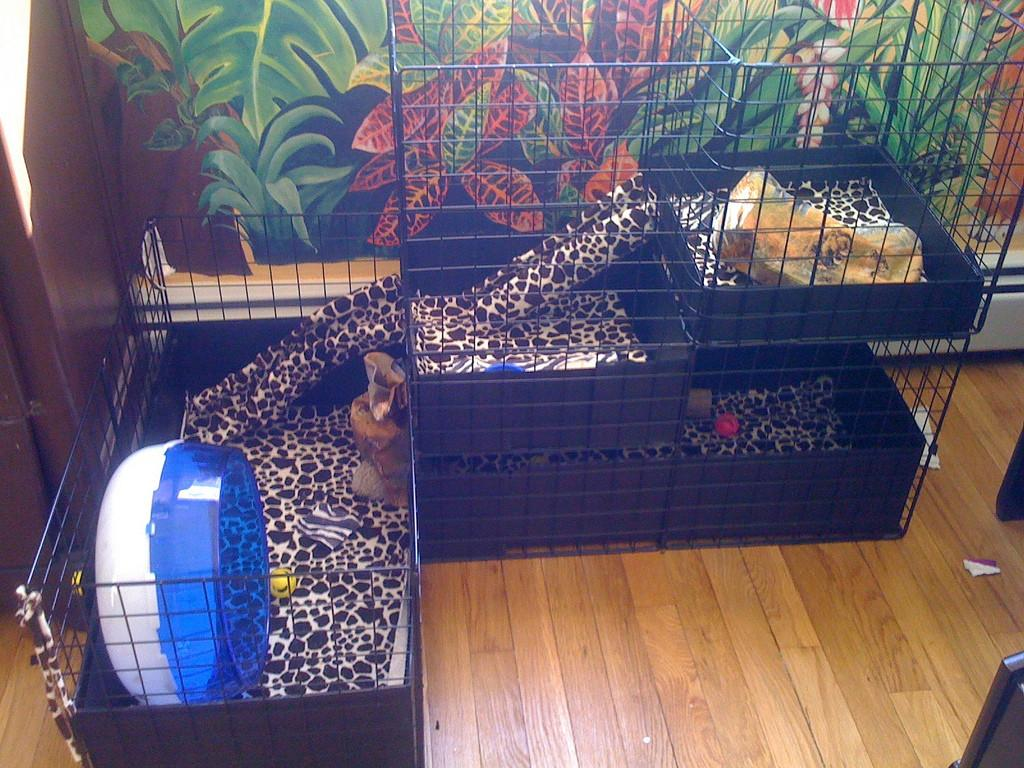 Final Renovation Cage Our Hedgehog Thorn Flickr
