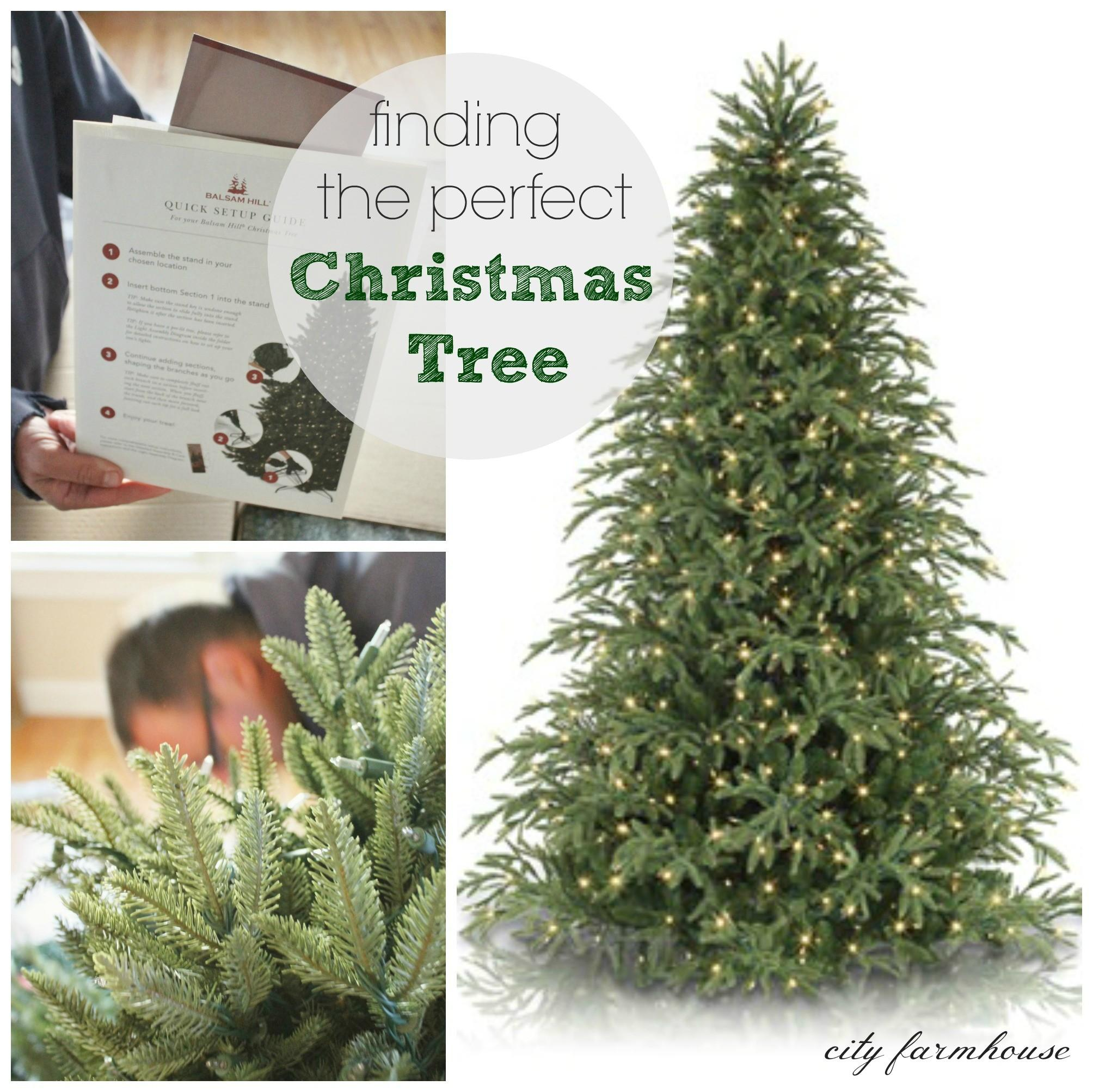 Finding Perfect Christmas Tree City Farmhouse