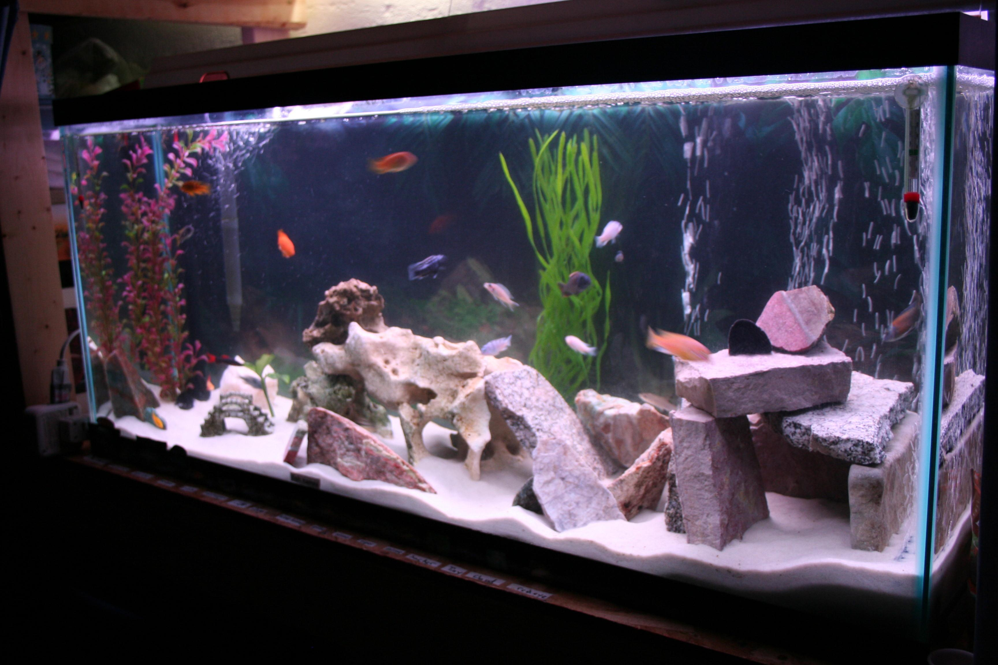 Fish Tank Home Made Decorations Mission Spot
