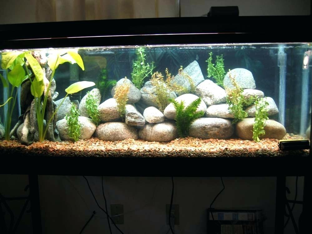 Fish Tank Idea Senalka