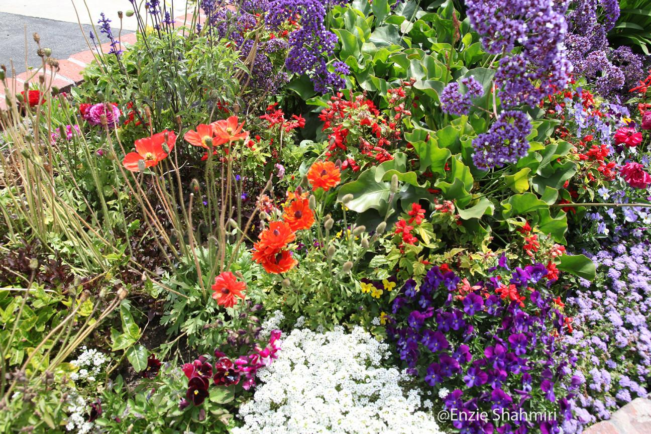 Flower Bed Beautiful Flowers