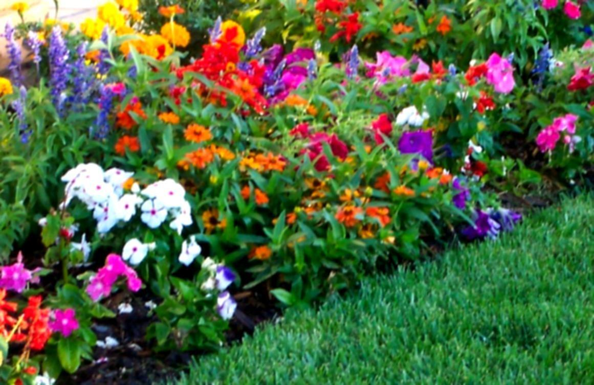 Flower Garden Landscaping Green Grass Colourful