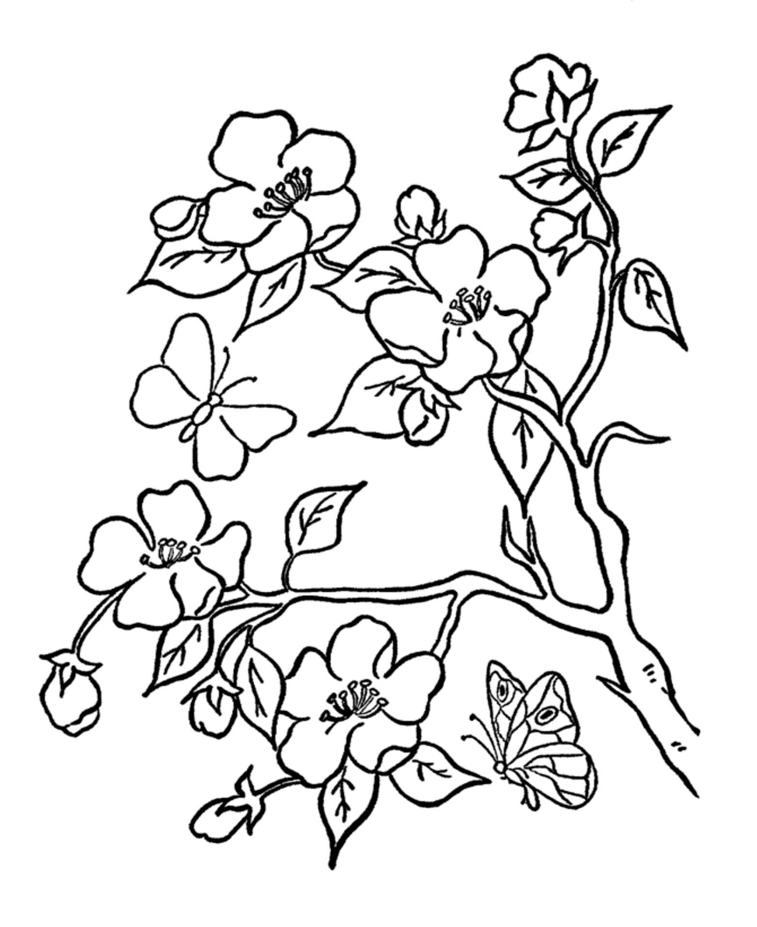 Flower Vegetation Coloring Pages Adults Adult