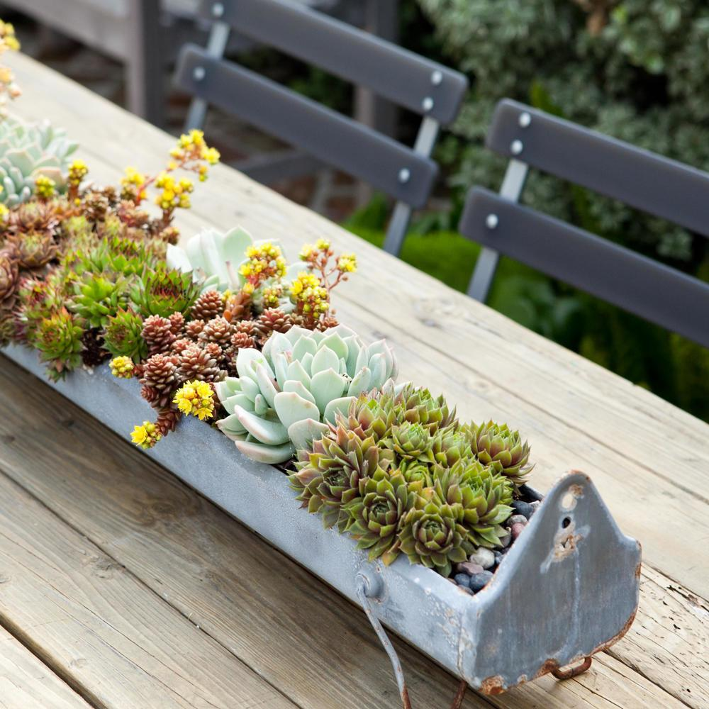 Foolproof Ways Keep Your Succulents Alive Sunset