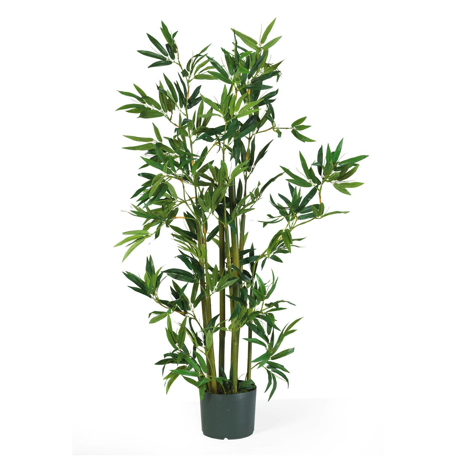 Foot Bamboo Plant Potted 5040