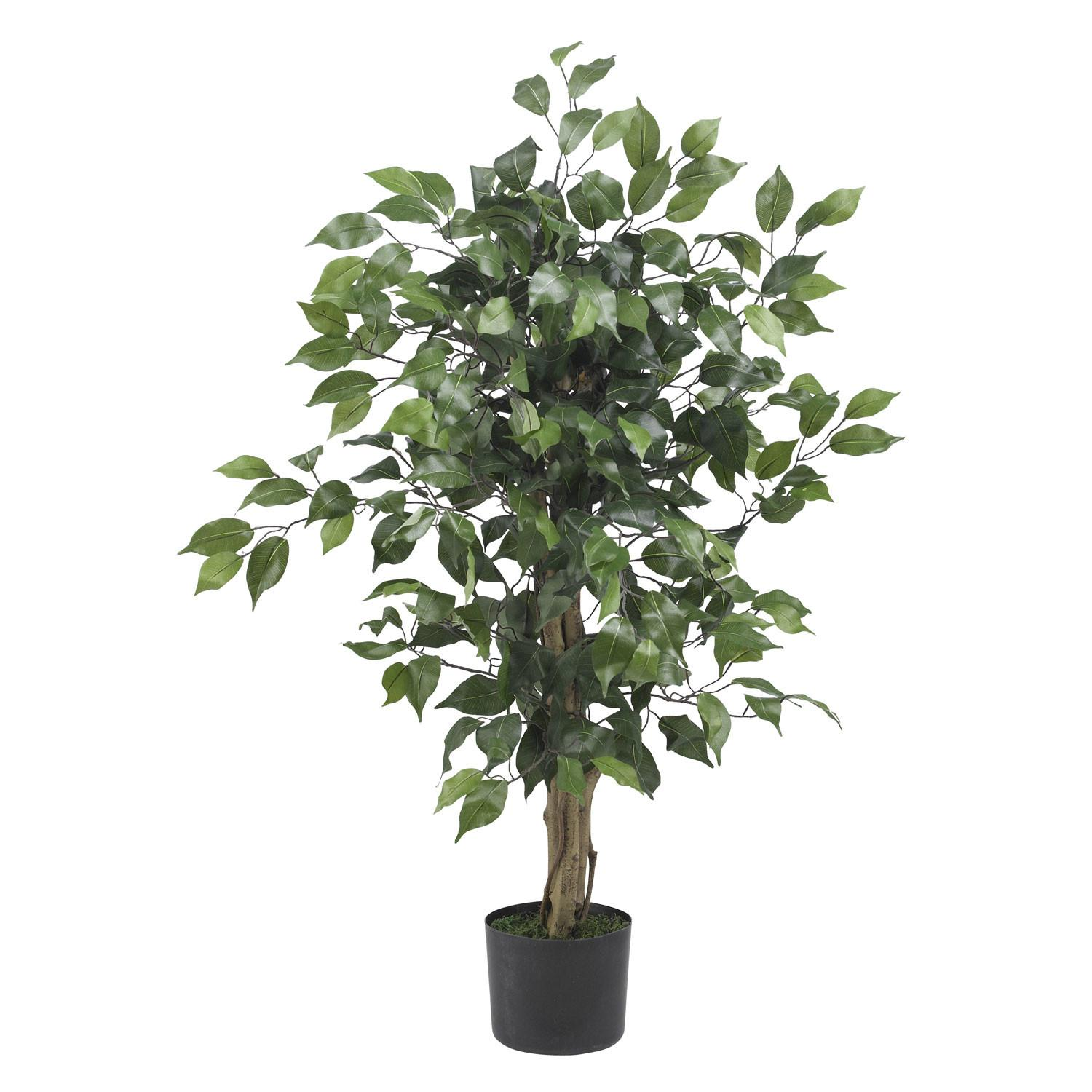 Foot Ficus Tree Potted 5298
