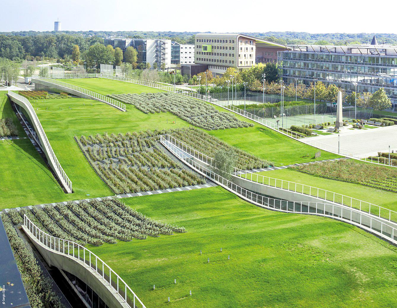 France Requires All New Buildings Have Green Roofs