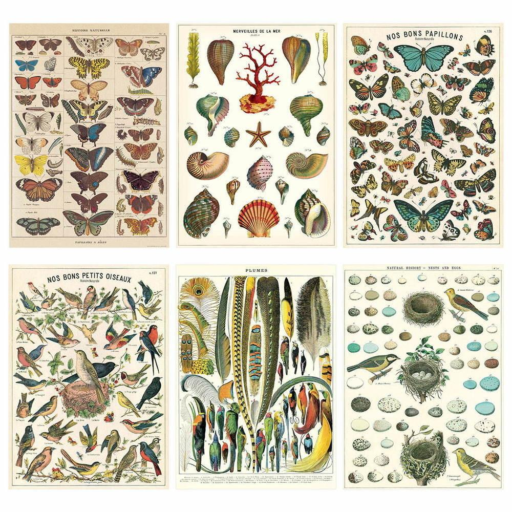 French Nature Vintage Style Poster Set Italian