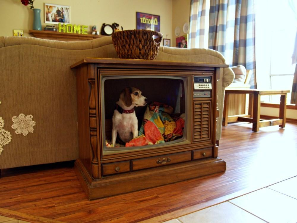 Fried Okra Console Dog Bed