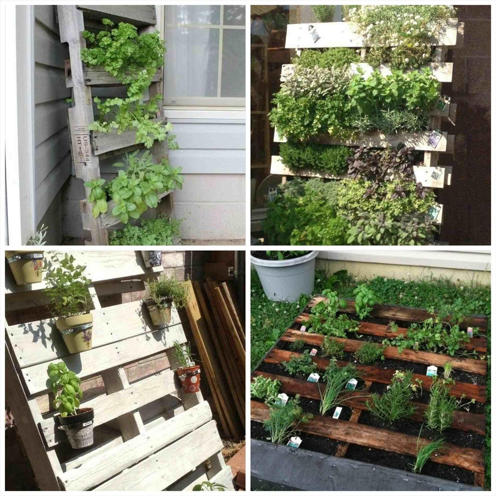 Garden Photos Pallet Wall Herb