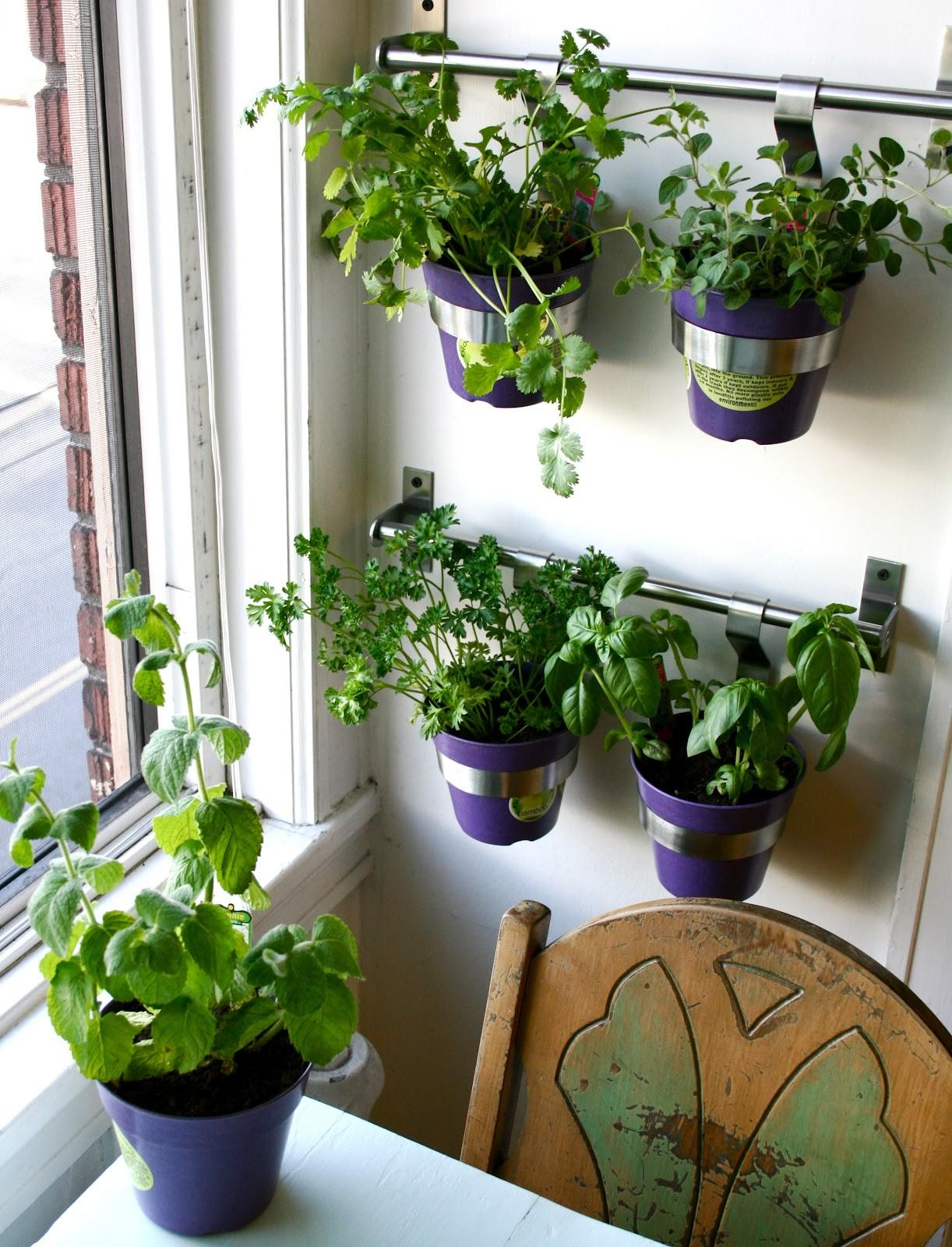 Spectacular Indoor Herb Gardens That Every Man Dream About Photographs Decoratorist