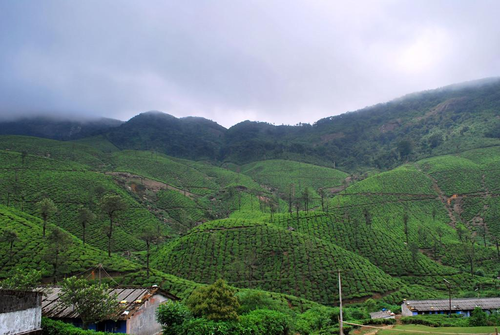 Green Carpeted Hills