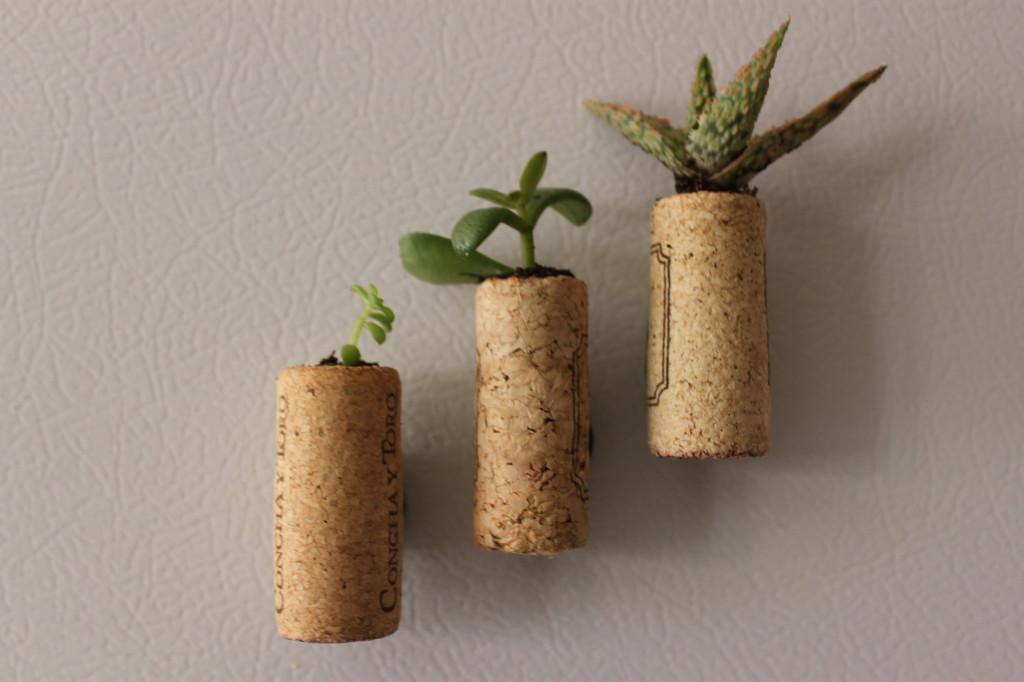 Green Diy Mini Succulent Wine Cork Planters Sweet Greens