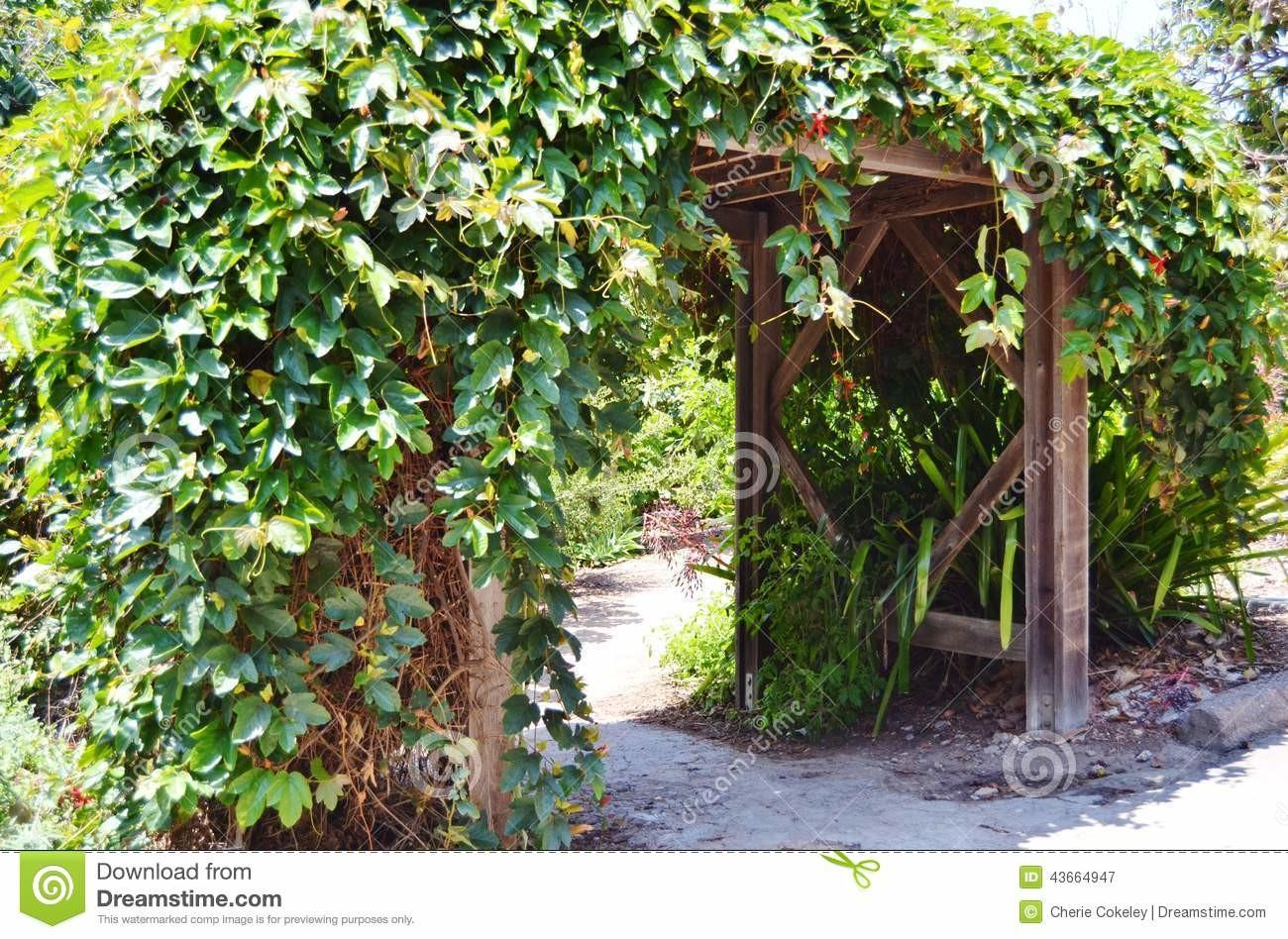 Green Ivy Covered Archway Stock