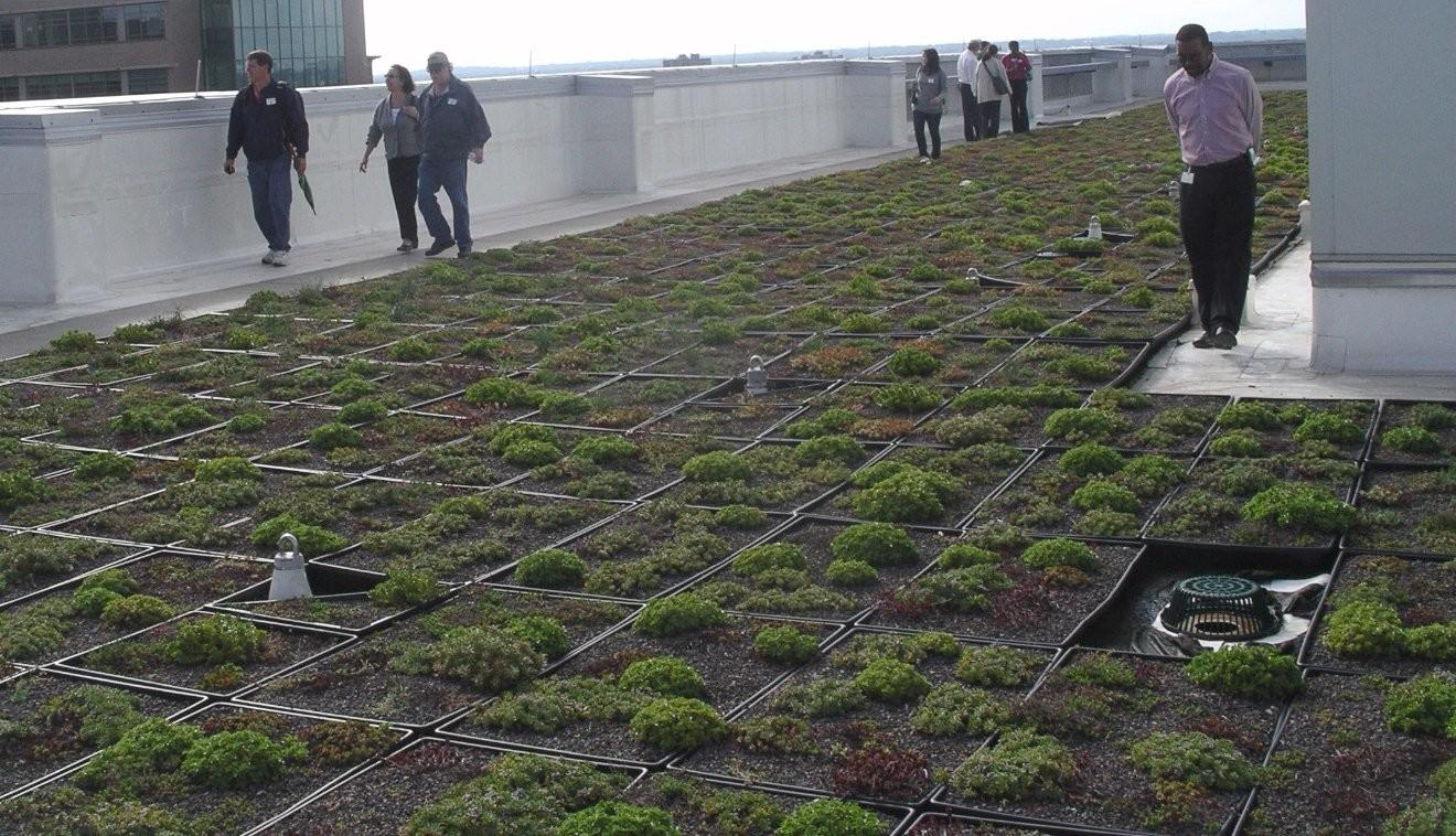 Green Roofs Homes