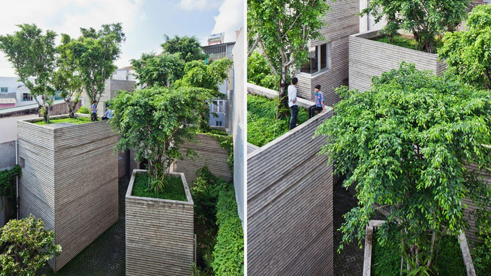 Greenery Scarce Make Buildings Into Giant