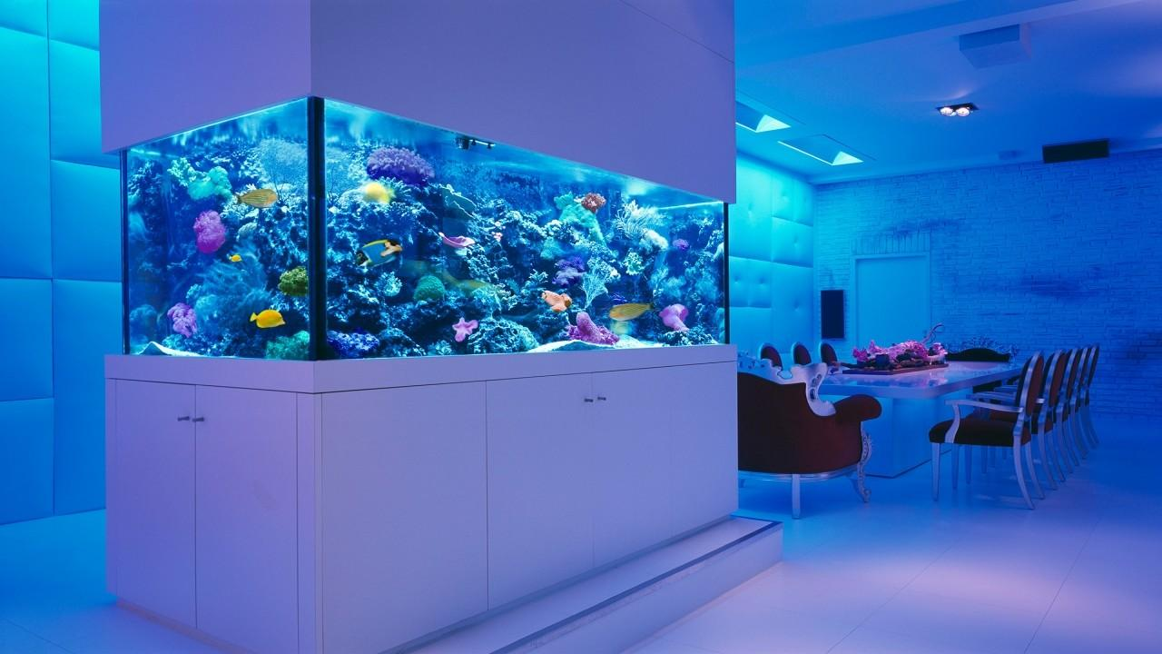 Guest Room Decorating Ideas Fish Tanks Aquariums