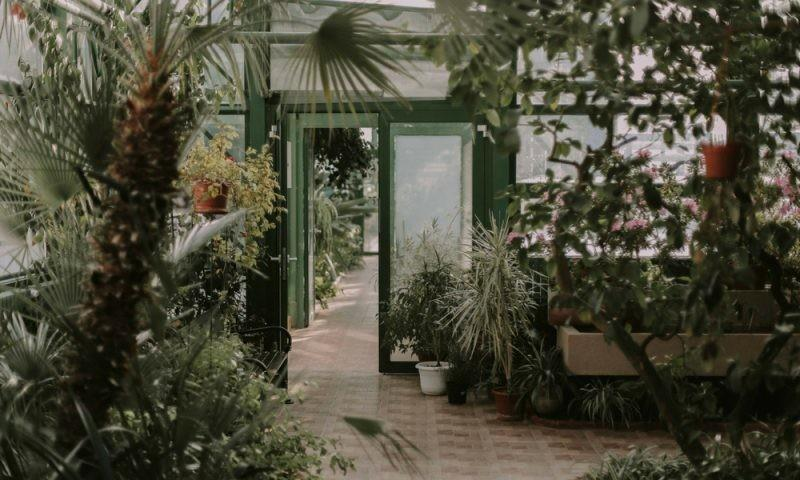 Guide Which Indoor Faux Plants Choose Pramshed