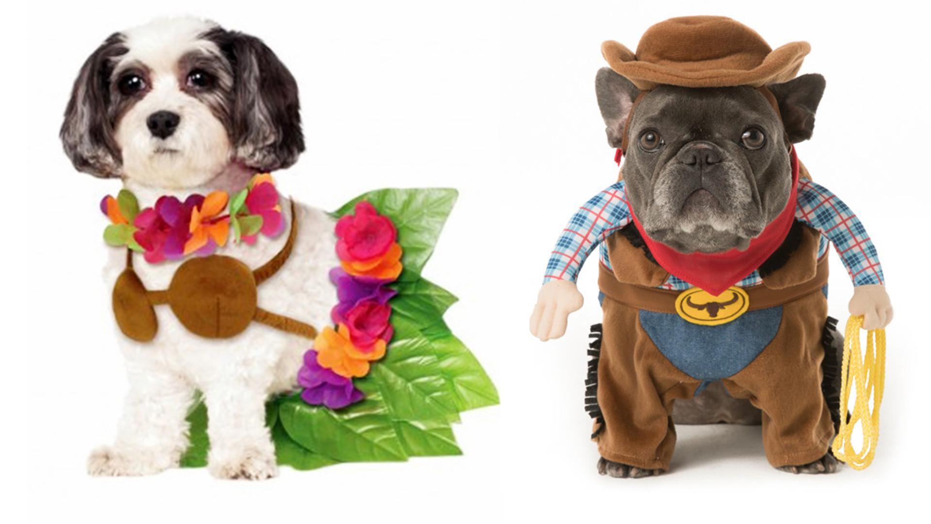 Halloween Dog Costume Ideas Easy Cute Costumes