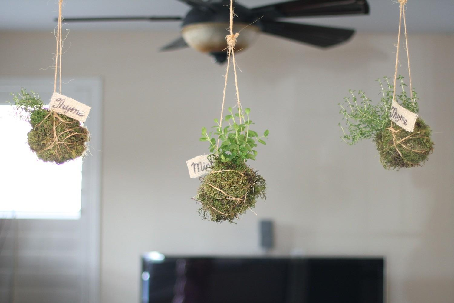 Hanging Ceiling Diy Indoor Garden Planter