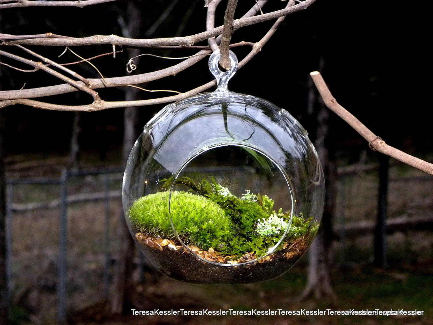 Hanging Glass Globe Diy Moss Terrarium Kit Live Assorted