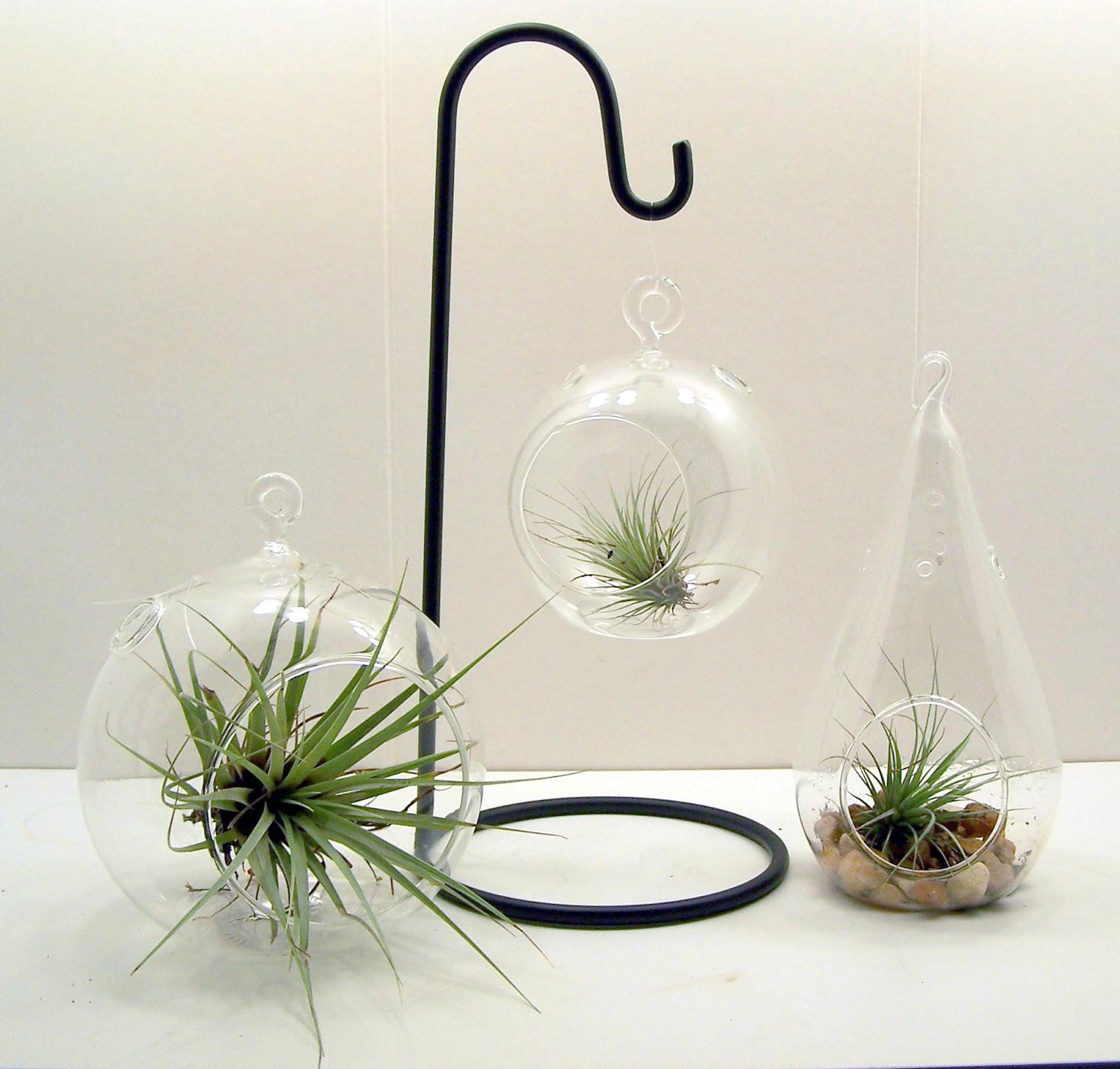 Hanging Glass Terrarium Christmas Ornament Holder Made