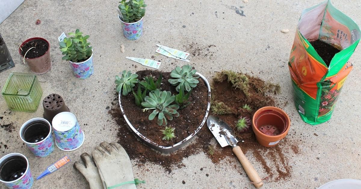 Heart Shaped Diy Planter Succulents Soccer Mom Style