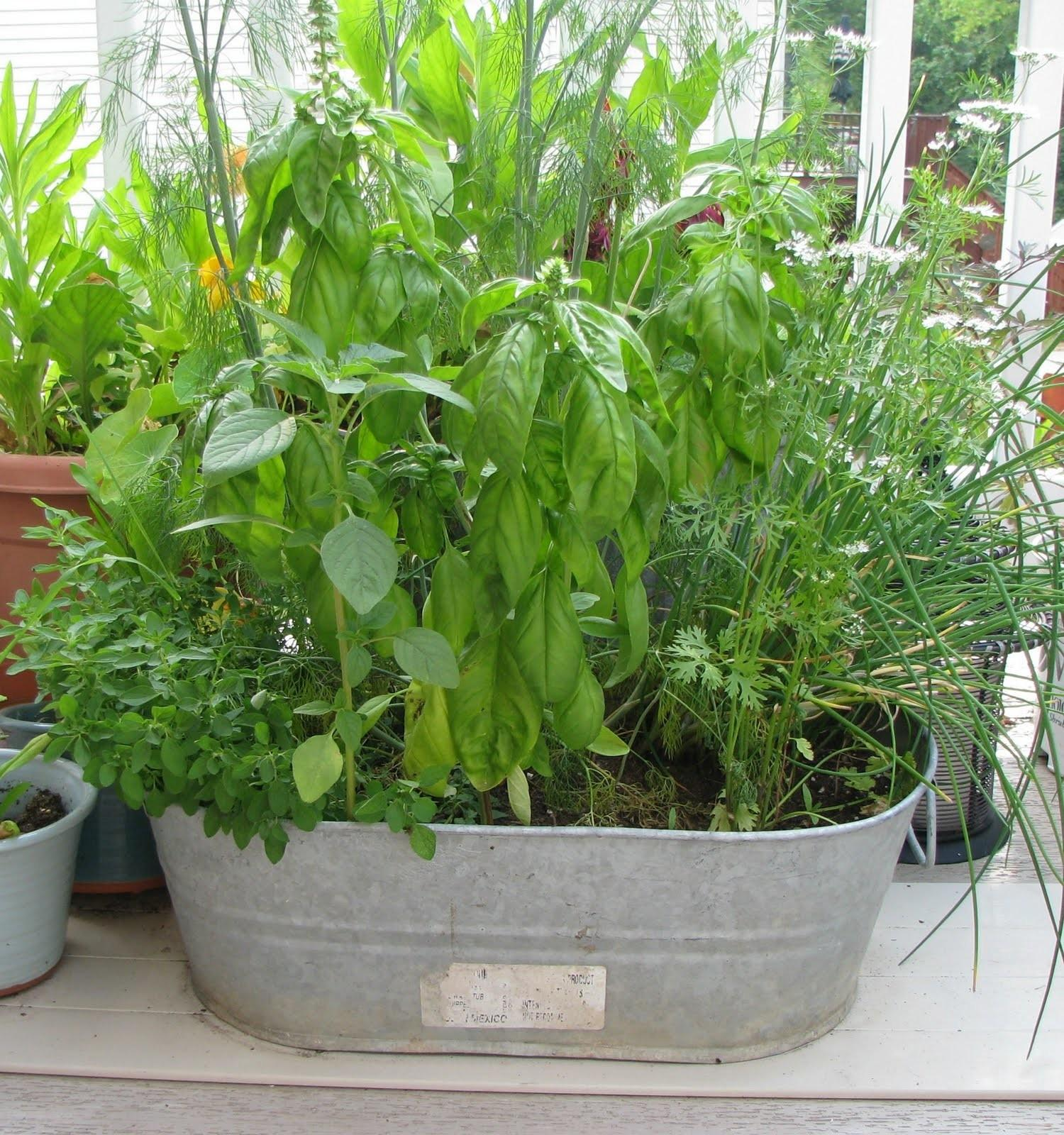Herb Container Gardens Creative Home Decorations Insight
