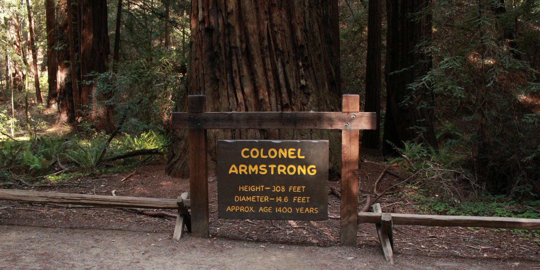 Hiking California Redwoods Outdoor Project