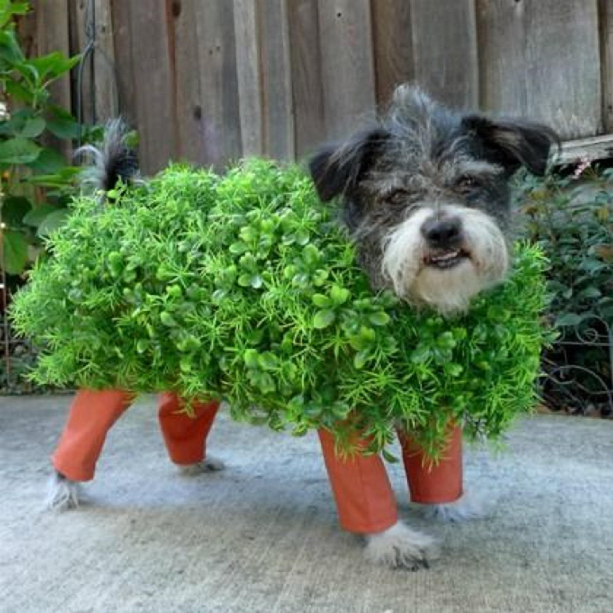 Hilarious Homemade Halloween Costumes Your Dog Chia