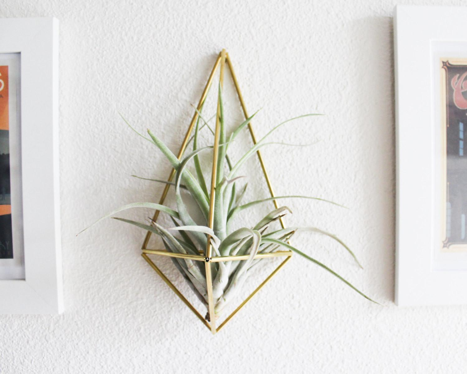 Himmeli Fig Wall Sconce Brass Air Plant Holder