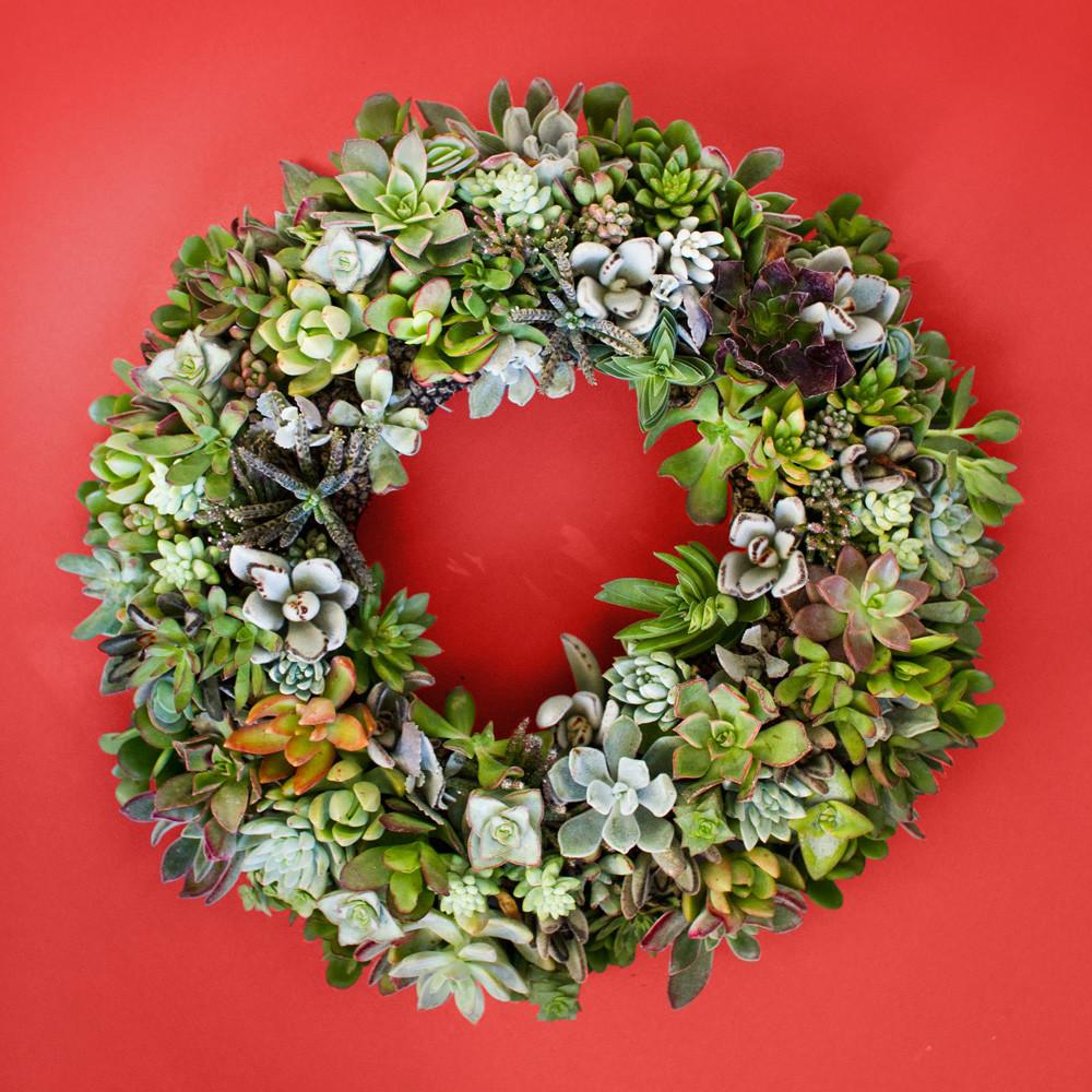 Holiday Christmas Wreath Succulents Juicykits