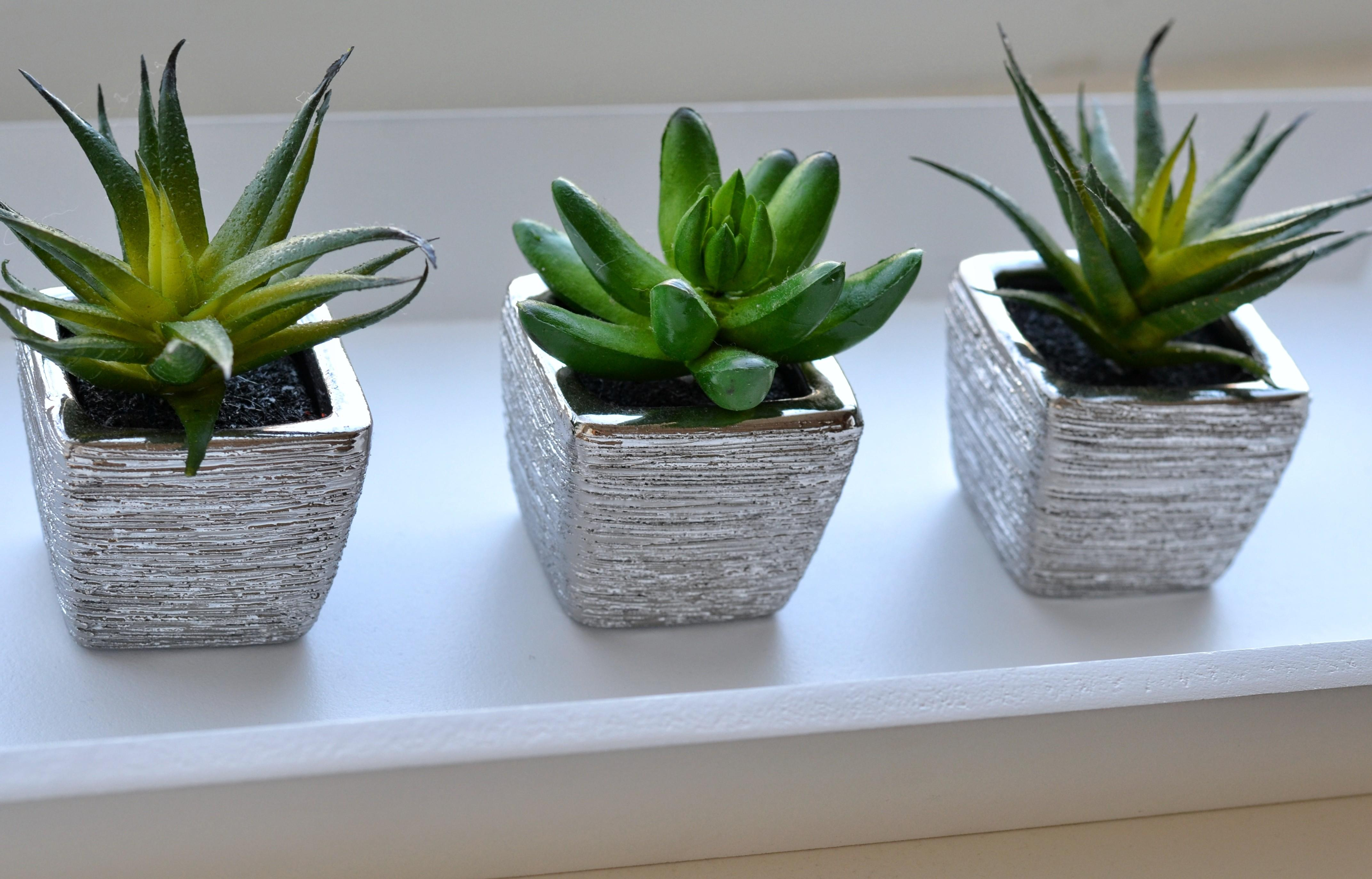 Home Decor Artificial Succulent Plant Cherish Tomorrow