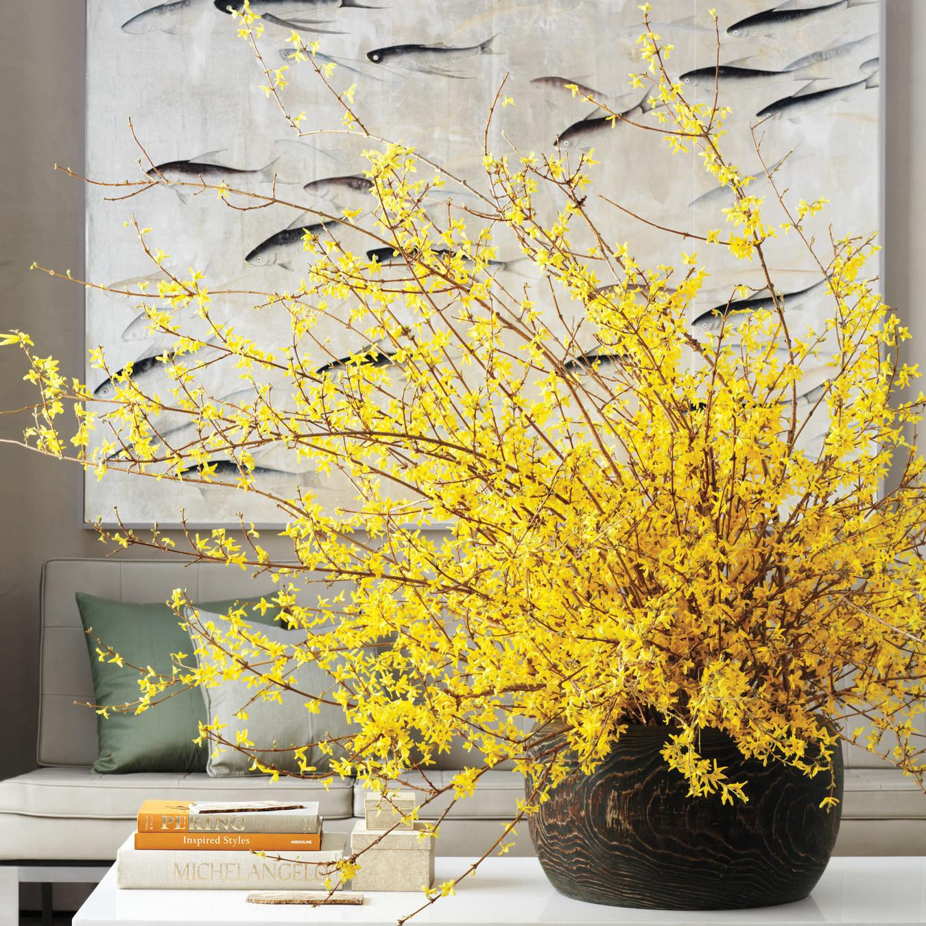 Home Design Forsythia Martha Stewart