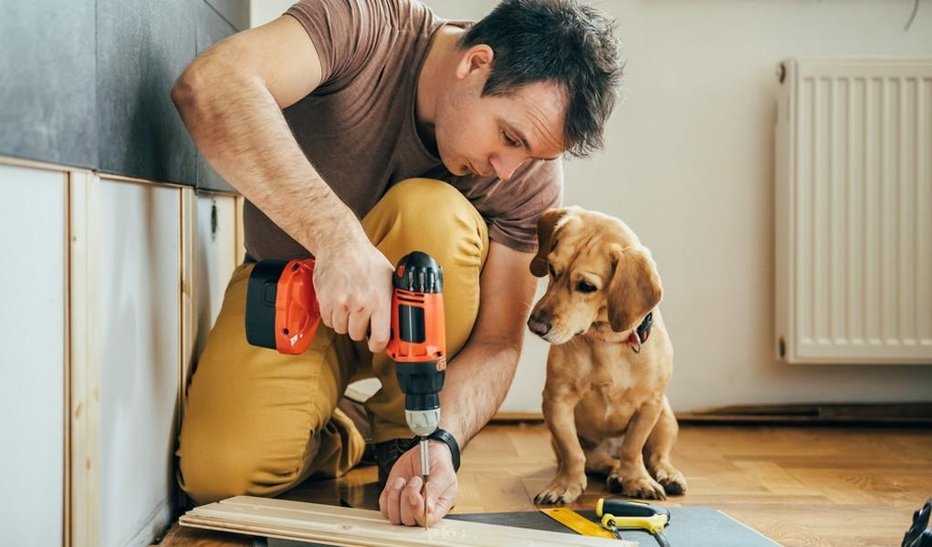 Home Improvement Projects Dog Owners Top Tips