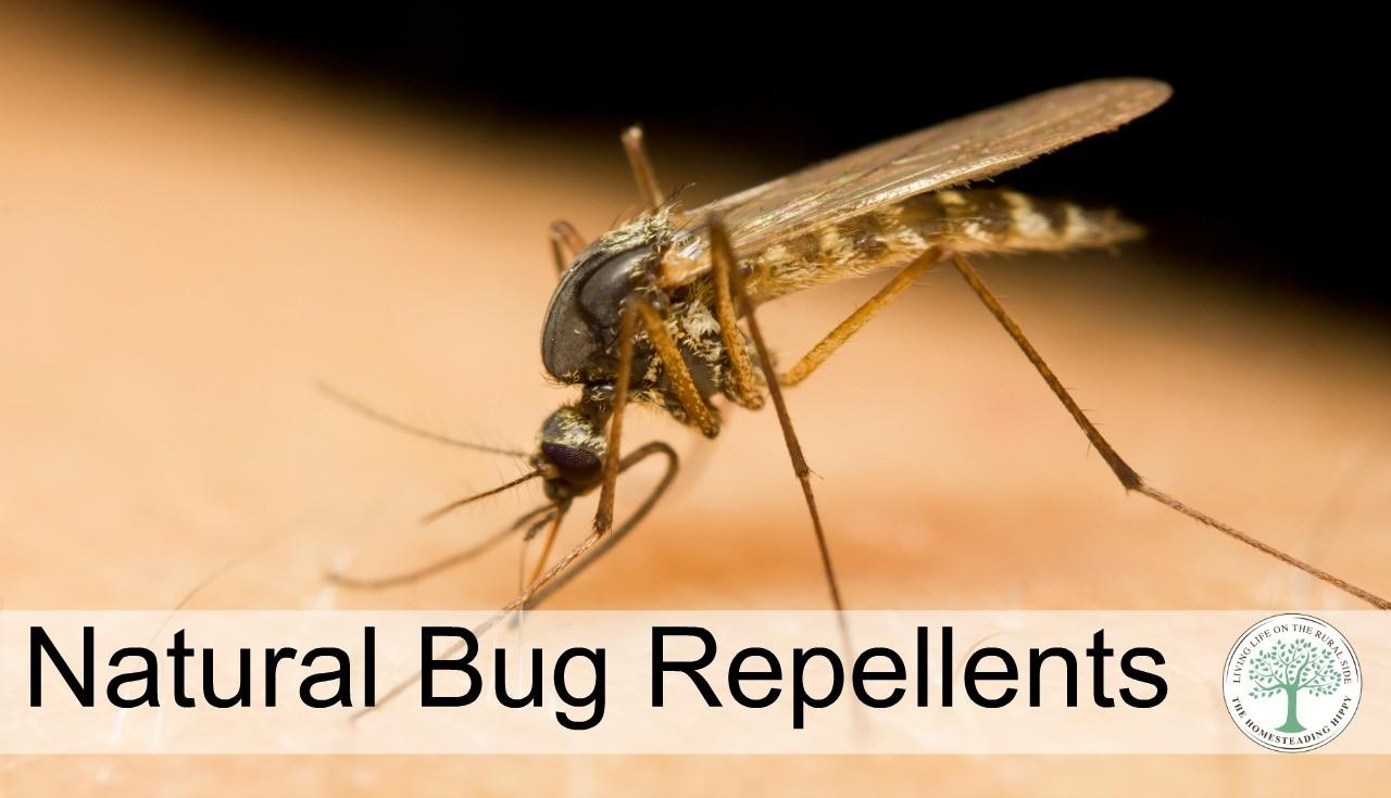 Homemade All Natural Mosquito Repellent