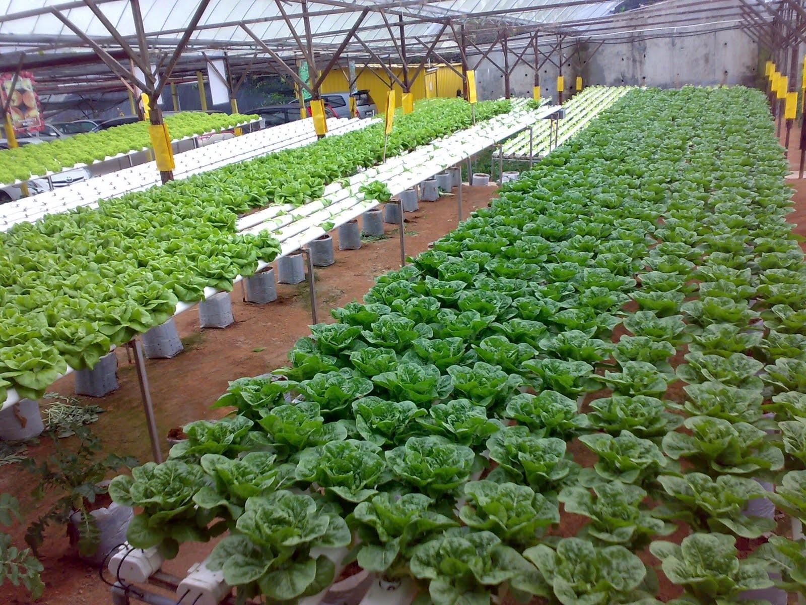 Homemade Hydroponic Systems Methods