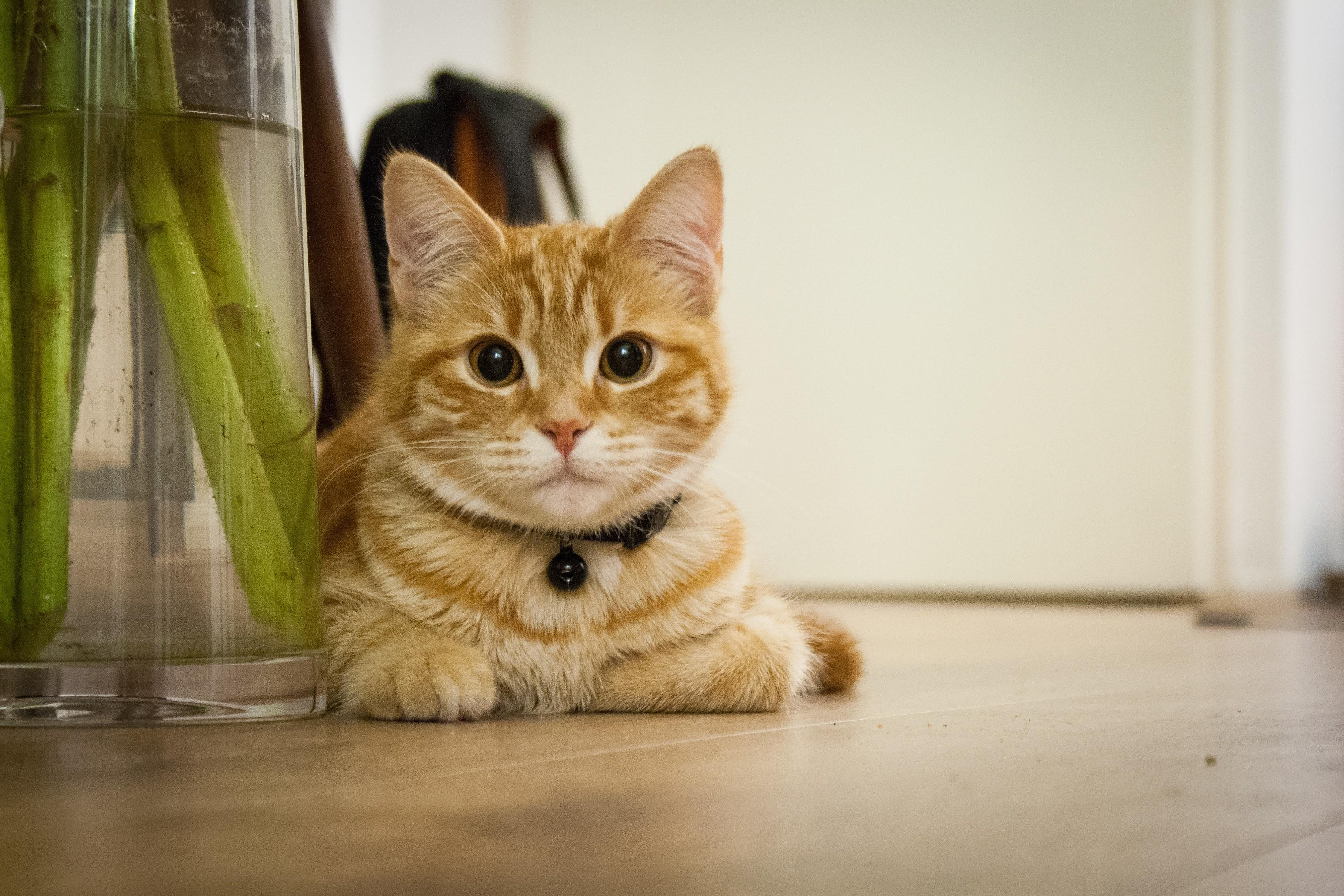 House Cat Guide