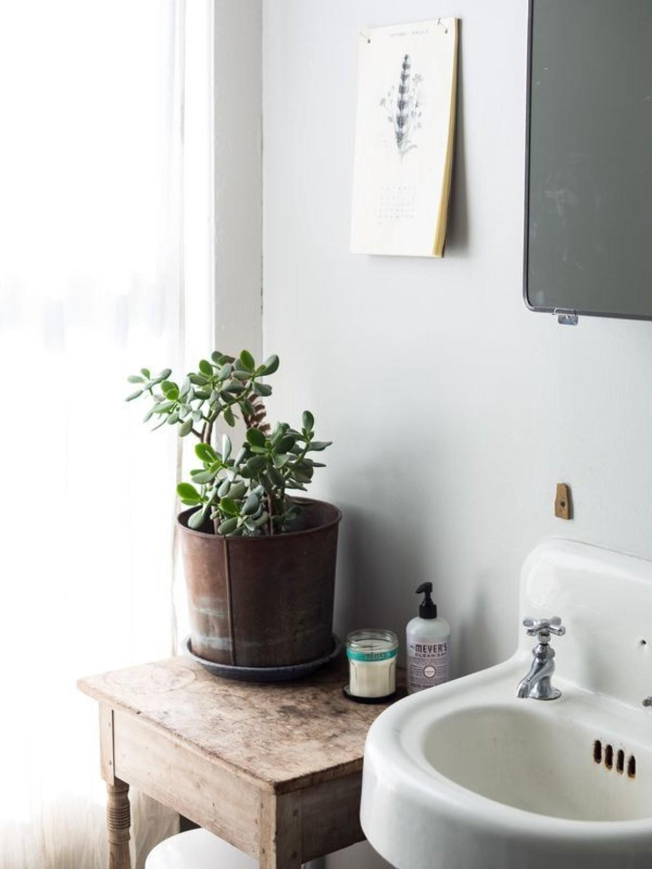 Houseplants Survive Your Busy Schedule