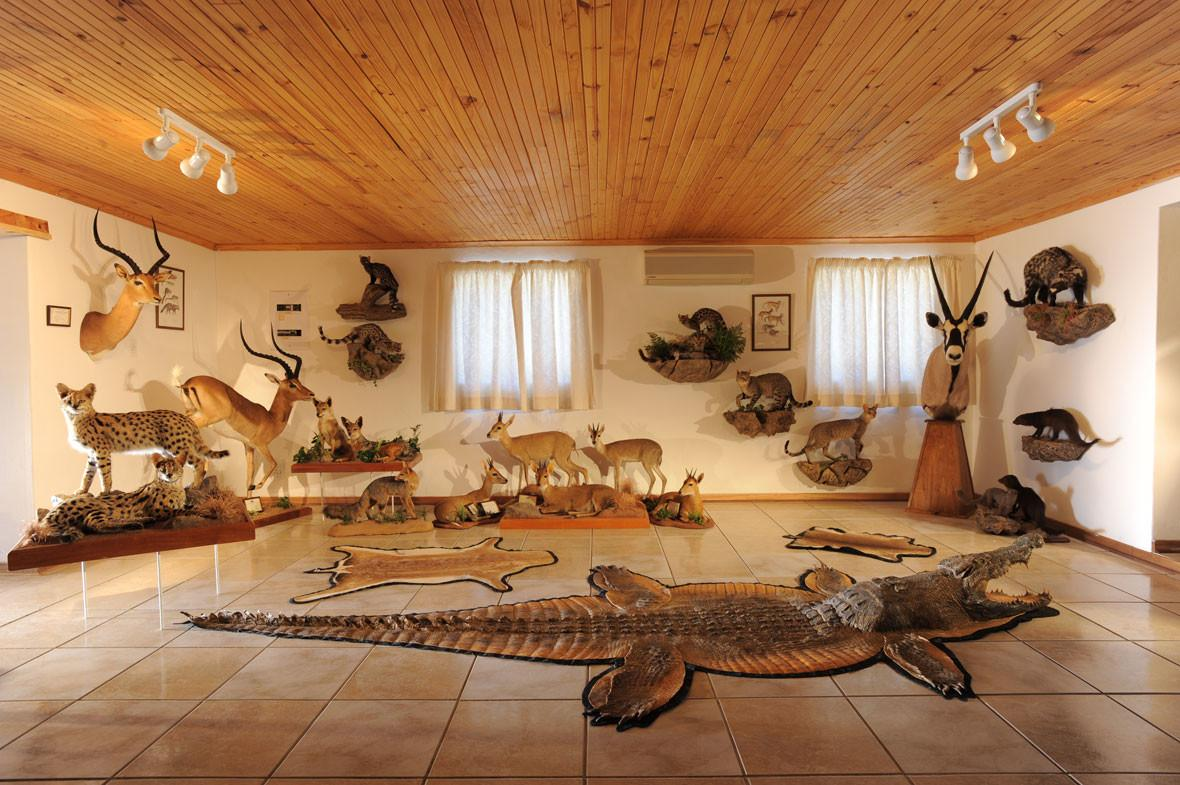 Hunting Room Decorating Ideas Fascinating Concept Home
