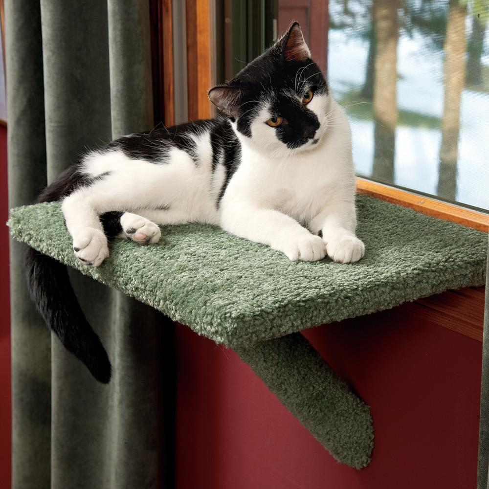 Ideal Safety Cat Window Perch Diy Optimizing Home