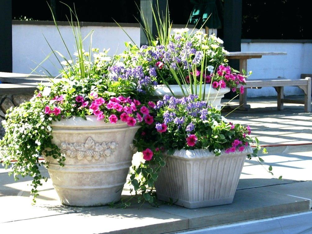 Ideas Large Planters Planter Flower
