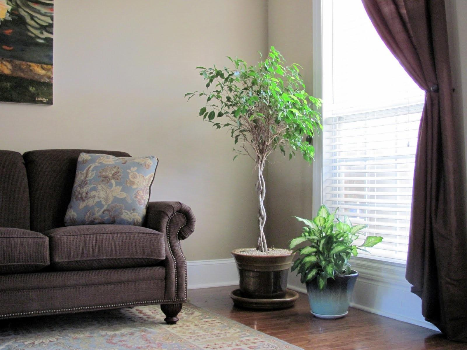 Ideas Tropical Indoor Plants Home Design Decor