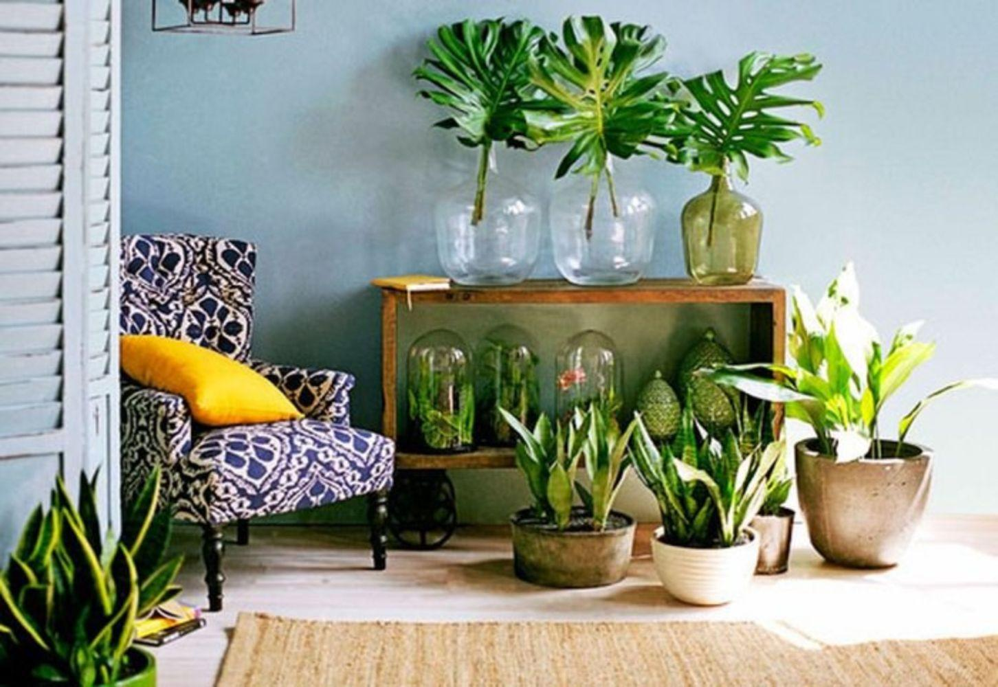 Indoor Houseplant Decoration Ideas Wartaku