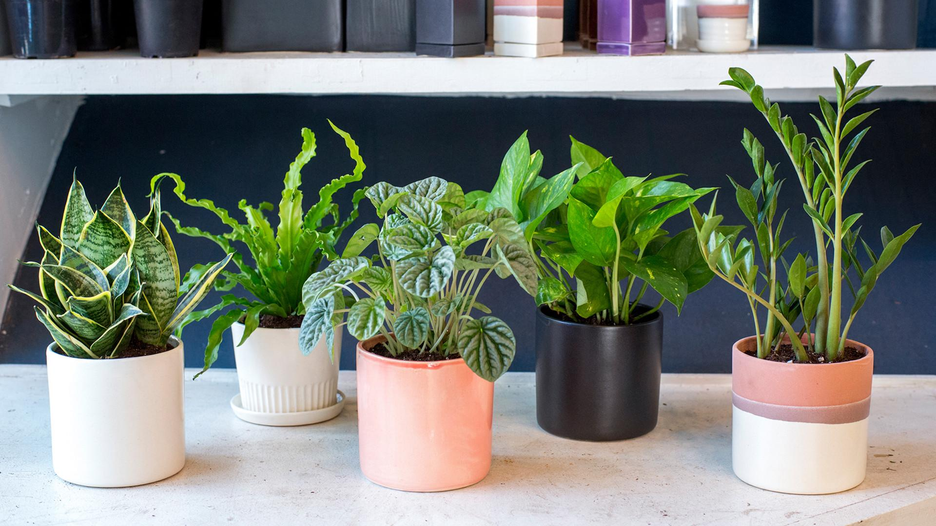 Indoor Houseplants Can Kill Unless Try Really